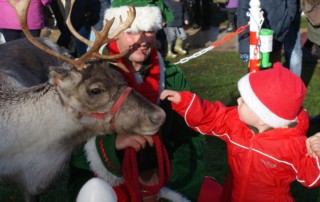 Christmas Tree Lighting with Reindeers
